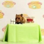 Hot-Dog-King-Versus-Tiny-Hamster-in-a-Hot-Dog-Eating-Contest-Who-Will-Win