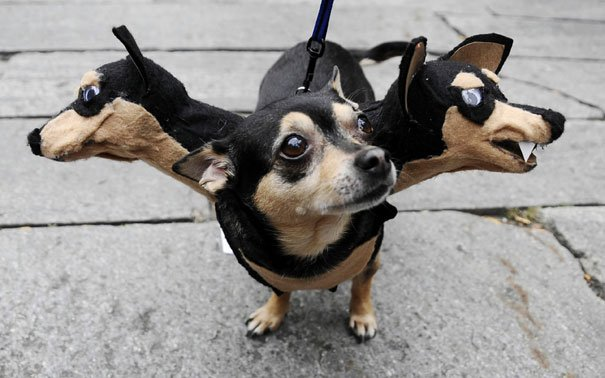 Cool Halloween Costume For Pets-01