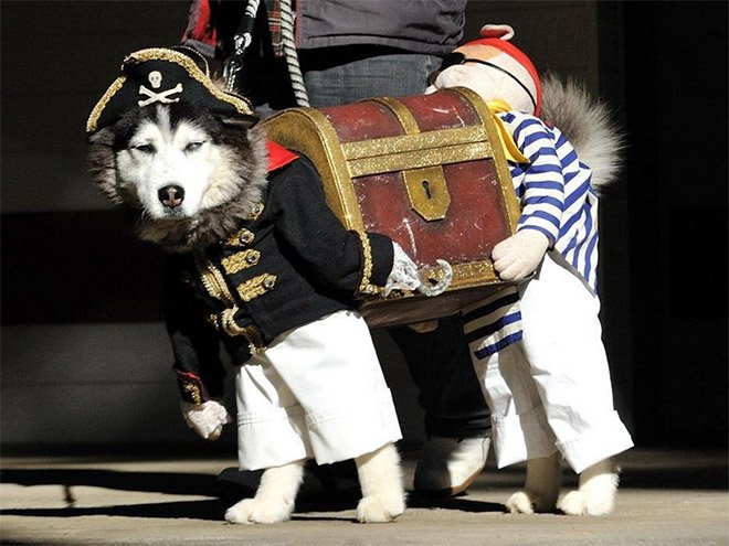 Cool Halloween Costume For Pets-03