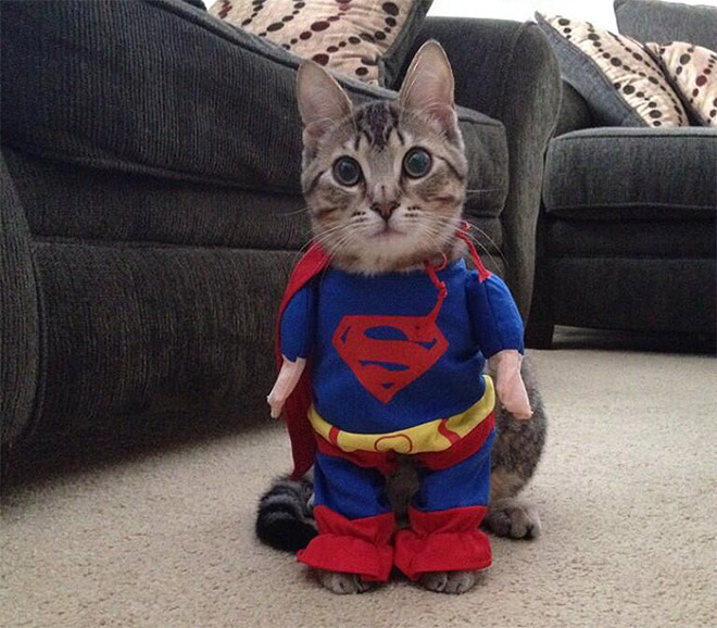 Cool Halloween Costume For Pets-07