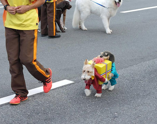 Cool Halloween Costume For Pets-08