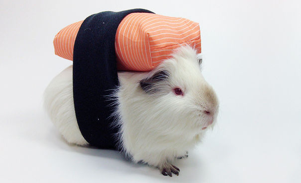 Cool Halloween Costume For Pets-12