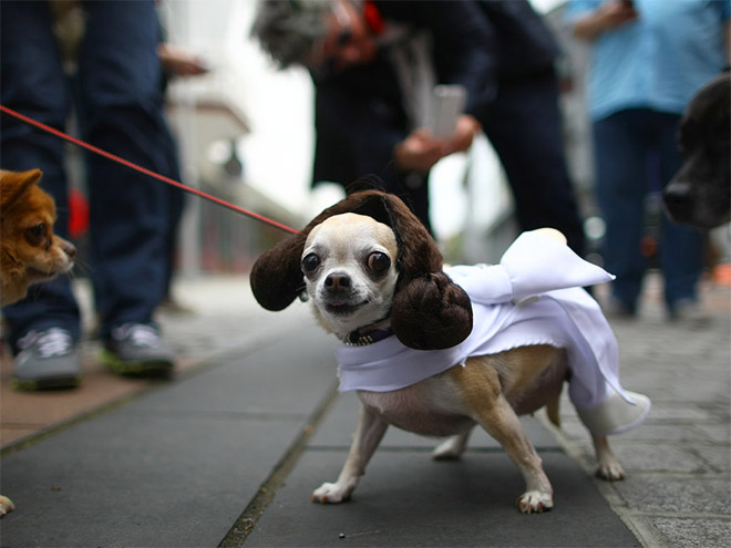 Cool Halloween Costume For Pets-13