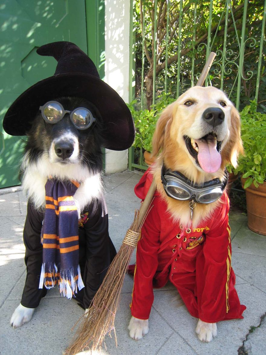 Cool Halloween Costume For Pets-14 & 15 Cool Halloween Costume For Pets