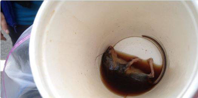 Never Thought This Could Happen In McDonalds I Will Never Order Coffee Again-02