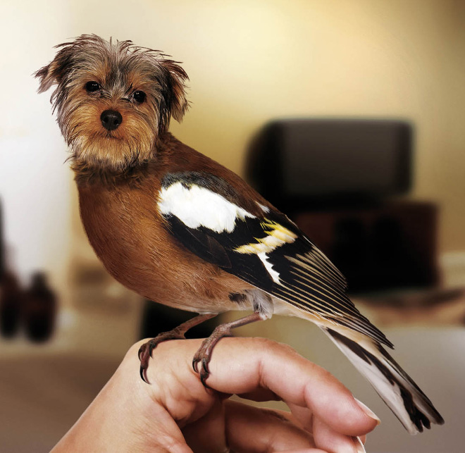 The Most Adorable And Faithful Pet Ever Dirds No This Cant Be Real-004