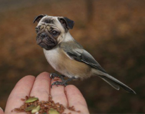 The Most Adorable And Faithful Pet Ever Dirds No This Cant Be Real-11