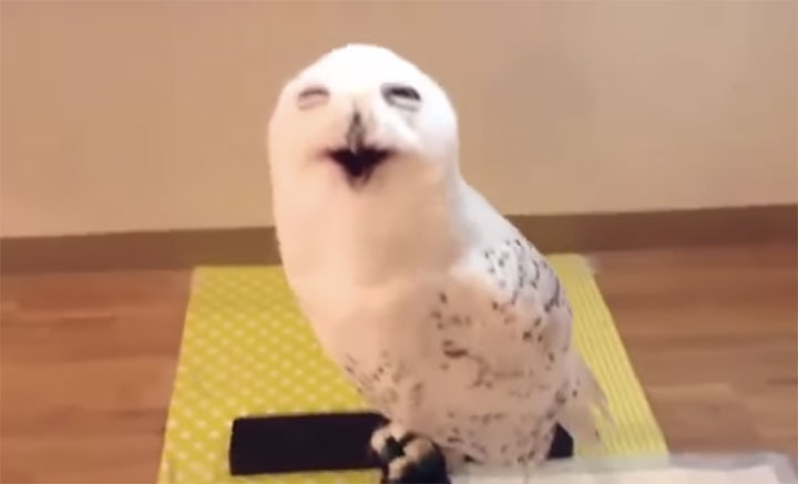 This-Giggling-Owl-Will-Brighten-Up-Your-Day-Seriously-It-Will-Make-You-Laugh
