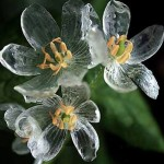 Transparent-Flowers-In-The-Rain-This-Is-Truly-Amazing