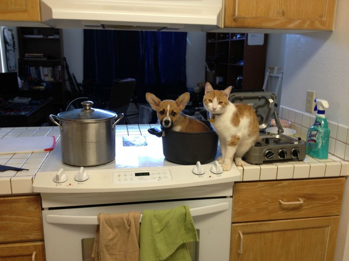 This Corgi Best Friend Is A Cat They Are Adorably Cute Together-01
