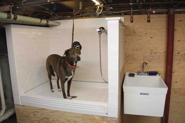 15 Brilliant Bathroom Ideas For Your Pet Dog