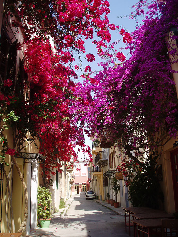 Mesmerizing Streets Shaded By Flowers And Trees-09
