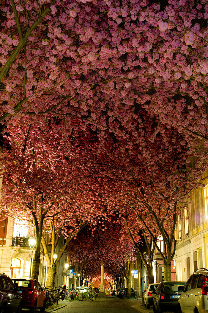 Mesmerizing Streets Shaded By Flowers And Trees-11