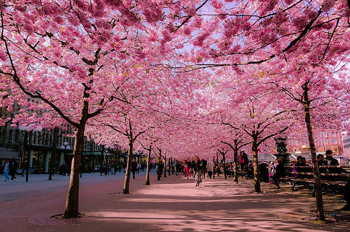 Mesmerizing Streets Shaded By Flowers And Trees-12