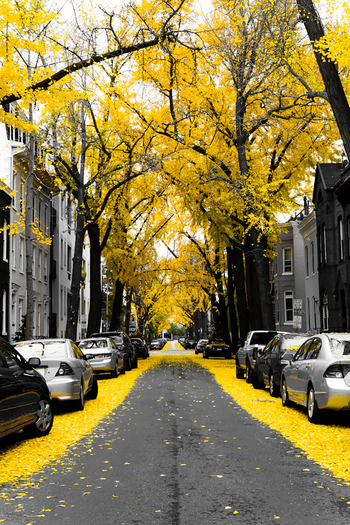 Mesmerizing Streets Shaded By Flowers And Trees-13