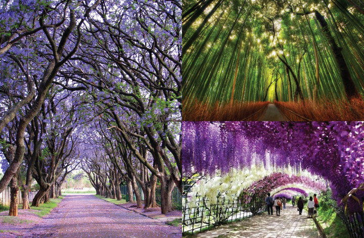 Mesmerizing-Streets-Shaded-By-Flowers-And-Trees