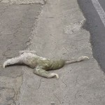 Sloth-Gets-A-Helping-Hand-From-A-Kind-Man-To-Cross-The-Road
